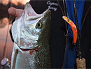 Steelhead Fishing St Joseph River Guide Originator Charters